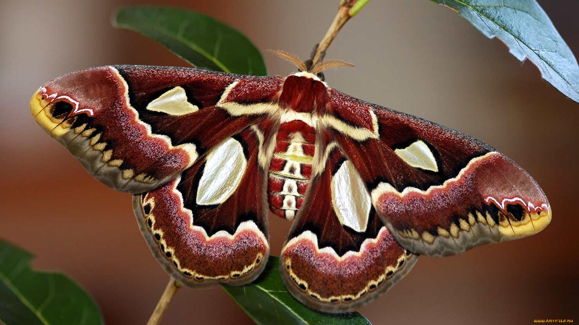 Красивые большие бабочки фото